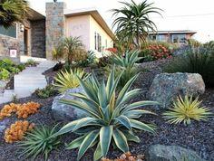 un-jardin-tropical-en-pente-abrupte-palmier-succulents-gravier-et-grosse-pierre-decoration-jardin-plantes-de-rocaille