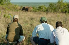 Simon and guests watching elephants peacefully on their walk at Sosian, Laikipia, Kenya  www.sosian.com
