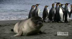海豹「愛的抱抱」 讓攝影師融化了 - 中時電子報