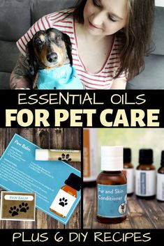 How to use essential oils for pets. 6 essential oil recipes for dog fleas and itchy skin. Plus a pet paw balm a diffuser blend to calm anxiety and more. Care Skin Condition and Treatment Oil Makeup Essential Oils For Migraines, Essential Oils Dogs, Homemade Essential Oils, Essential Oil Diffuser Blends, Juniper Berry Essential Oil, Ginger Essential Oil, Pet Odor Eliminator, Citronella Essential Oil, Oils For Dogs