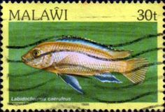 Malawi 1984 Fishes SG 696 Fine Used SG 696 Scott 435 Imprint 1986 Condition Fine Used Only one post charge applied on multipul purchases Details N B