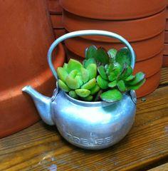 Vintage metal tea pot succulents