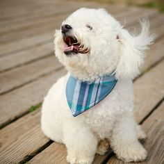 A bandana in our signature madras print is a oh so preppy way to add a little fun to your dog's wardrobe? This classic bandana style is easy to wear - roll down to desired hang length and tie a dapper