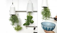Boskke Sky Planter hangs upside down - so minimal and striking, but I'm not really sure plants like to grow upside down!