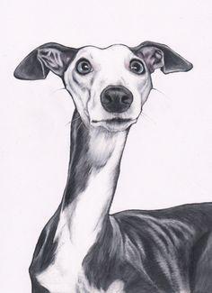 Custom dog illustration commission dog art pet by JimGriffithsArt