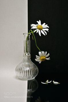 maybe spring - Pinned by Mak Khalaf Abstract blackflowerglasswhite by anisjarossi1