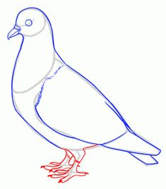 how to draw pigeons step 9