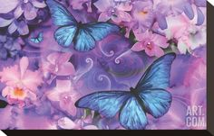 Violet Orchid Morpheus Stretched Canvas Print by Alixandra Mullins at Art.com