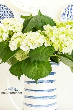 The secrets to long lasting cut hydrangeas. Tips to keep hydrangeas from wilting.