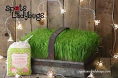 Grow real grass in your basket this Easter! Spring Time, Grass, Container, Easter, Kit, Ideas, Easter Activities, Grasses, Thoughts