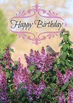 happy birthday greetings * happy birthday wishes - happy birthday - happy birthday wishes for a friend - happy birthday funny - happy birthday wishes for him - happy birthday sister - happy birthday quotes - happy birthday greetings Birthday Greetings For Women, Happy Birthday Wishes For A Friend, Happy Birthday Vintage, Birthday Wishes Flowers, Happy Birthday Video, Happy Birthday Celebration, Happy Birthday Flower, Birthday Card Sayings, Happy Birthday Sister