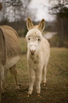 Burro-want a small burro and name it Hosanna