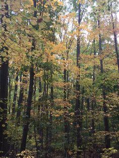 Yellow Trail, Staten Island Greenbelt