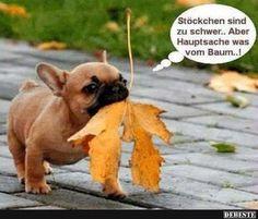 Stöckchen sind zu schwer.. Aber Hauptsache was vom Baum..! | Lustige Bilder, Sprüche, Witze, echt lustig