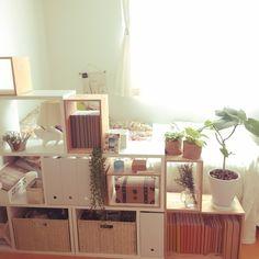 harさんの、部屋全体,観葉植物,無印良品,本棚,ナチュラル,IKEA,100均,一人暮らし,ニトリ,セリア,salut!,ブックカバー,スタジオクリップ,ザラホーム,いなざうるす屋さん,のお部屋写真