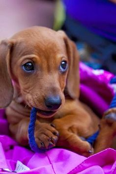 Awww. http://pinterest.com/jaykaslo/must-love-dogs