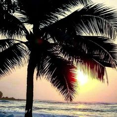 【ame_mee0207】さんのInstagramをピンしています。 《・ 💘 I  trust  life 💘 ・ ・ そうなろうと思えば、・ それに適したモノが舞い込むよ🌠 ・ ・ 🌴 Have a wonderful weekend …  me : 🌴 ・ #hawaii#aloha#beach#beachside#surf#surfersparadise#happy#tropical#paradise#ocean#sea#sun#palm#palmtree#view#vista#sand#beautiful#love#happy#trust#life#thankyou#rex》