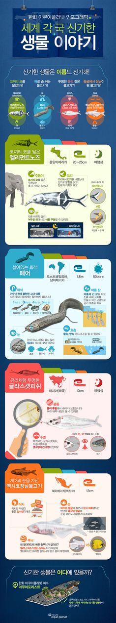세계 각국 신기한 생물에 관한 인포그래픽