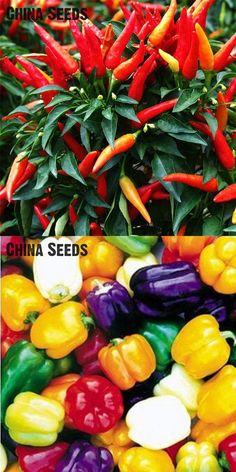 [Visit to Buy] 100Pcs/ Bag Ornamental Hot Pepper Seeds Multicolored Vegetable Seeds Prairie Fire Edible Grow Flores Bonsai Indoor Home Sementes #Advertisement