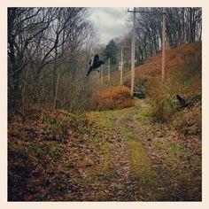 Turkey Crossing on Highbridge Trail at Gorge Metro Park, Photo by angdino