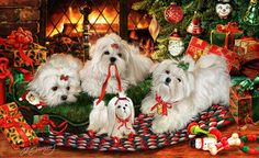 Maltese Christmas Holiday Cards are 8 x 5 and come in packages of 12 cards. One design per package. All designs include envelopes, your personal message, and choice of greeting. Teacup Puppies, Maltese Dogs, Christmas Mood, Christmas Animals, Dog Art, I Love Dogs, Holiday Cards, Images, Cute Animals