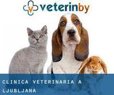 Risultati immagini per clinica veterinaria