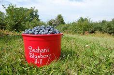 Buchan's Blueberry Hill  1472 Nelson Rd.  Traverse City Michigan, 49686
