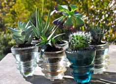 Repurpose glass insulators as the sweetest little succulent planters.