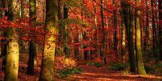 Cammini d'autunno: i sentieri italiani per ammirare la magia del foliage
