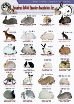 A few different bunny breeds. |