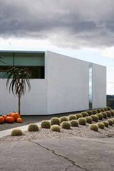 The Dowell-Pittman cactuses play off the seasonal pumpkins and the straight lines of the home.