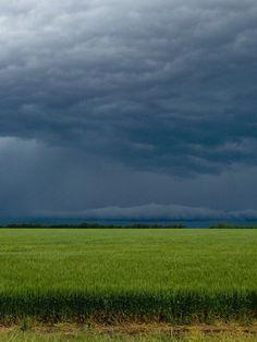 stormy skies over Kansas wheat field