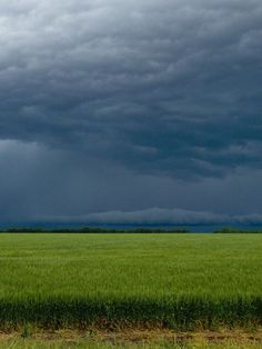 stormy skies over Kansas wheat field