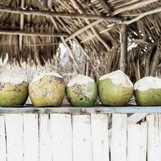 The Different Types of Coconut Oil Coconut Bowl, Beach Meals, Island Food, Tropical Vibes, Summer Of Love, Food Presentation, Palm Trees, Eco Friendly, Summertime