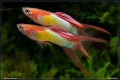 #tropicalfishtank