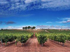 Uno de nuestros viñedos en todo su esplendor. Bodegas Portia