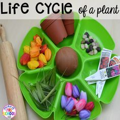 Life cycle of a plant play dough tray for a spring theme plus Plant Needs and Life Cycle Posters FREEBIE. Prefect for preschool, pre-k, and kindergarten.