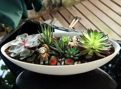 Mini jardins para você se inspirar