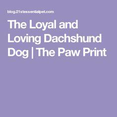 The Loyal and Loving Dachshund Dog | The Paw Print