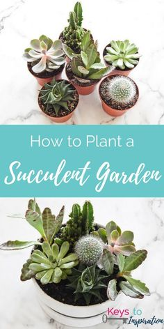 How to plant a modern succulent garden. Easy DIY project that makes a great home decor piece.