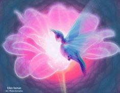 Humming Bird   Art / Photo Animation; Ellen Vaman www.facebook.com/ellen.vaman1   #EllenVaman #Stellar #VisionaryArt #Music #PhotoAnimation #Gif #Morphing #Poetry #HummingBird #Flower #Love #Light #Divinity