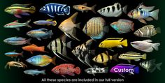 Dream Aquarium Screen Saver Virtual Aquarium Active Desktop