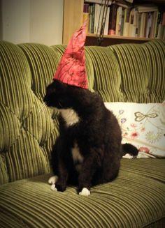 Loppukevennykseksi (koska minähän laitoin nämä vahingossa alkamaan alhaalta) kuva Sastamalana kaupunginkirjaston Facebooksivuilta joulukalenterin luukusta: Informaatikollamme on asiaankuuluvasti Piki-niminen kissa (kirjastokimppamme ja verkkokirjasto on nimetty tämän ylvään olennon mukaan, Pirkanmaalla ja kirjastoilla ei oikeasti ole asian kanssa mitään tekemistä). :)
