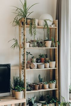 Indoor Plant Decor ideas are fun for people of all ages. You don't have to have a huge garden or your Indoor Plant Decor Ideas are perfect for small garden arrangements. There are many different plants that are suitable for… Continue Reading → My New Room, My Room, Uo Home, Ikea Inspiration, Room With Plants, Plant Shelves, Plant Decor, House Plants Decor, Plant Wall