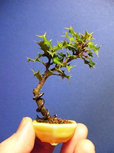 Miniature bonsai 1