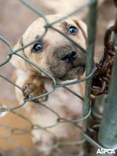 1d7f154a3b 46 Best ASPCA Around the Country images