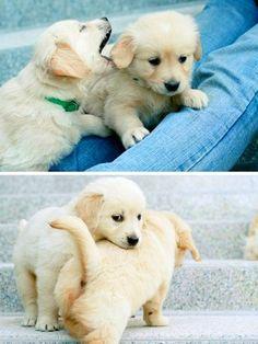 Om nom nom nom nom! Hungry puppy?