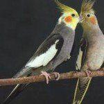 pássaros exóticos em criadouro