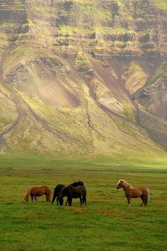 Wild, wild horses. Couldn't drag meeee awayyyy!