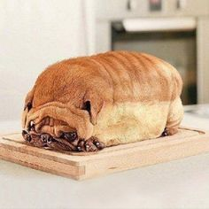 Is it a dog, or a loaf of bread?
